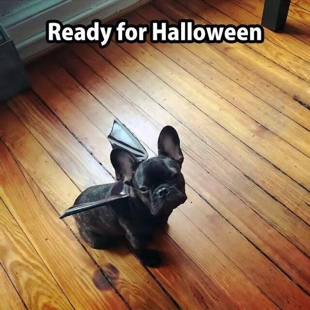 Pin by Tracy Martinez on Is It HALLOWEEN Yet? Cute