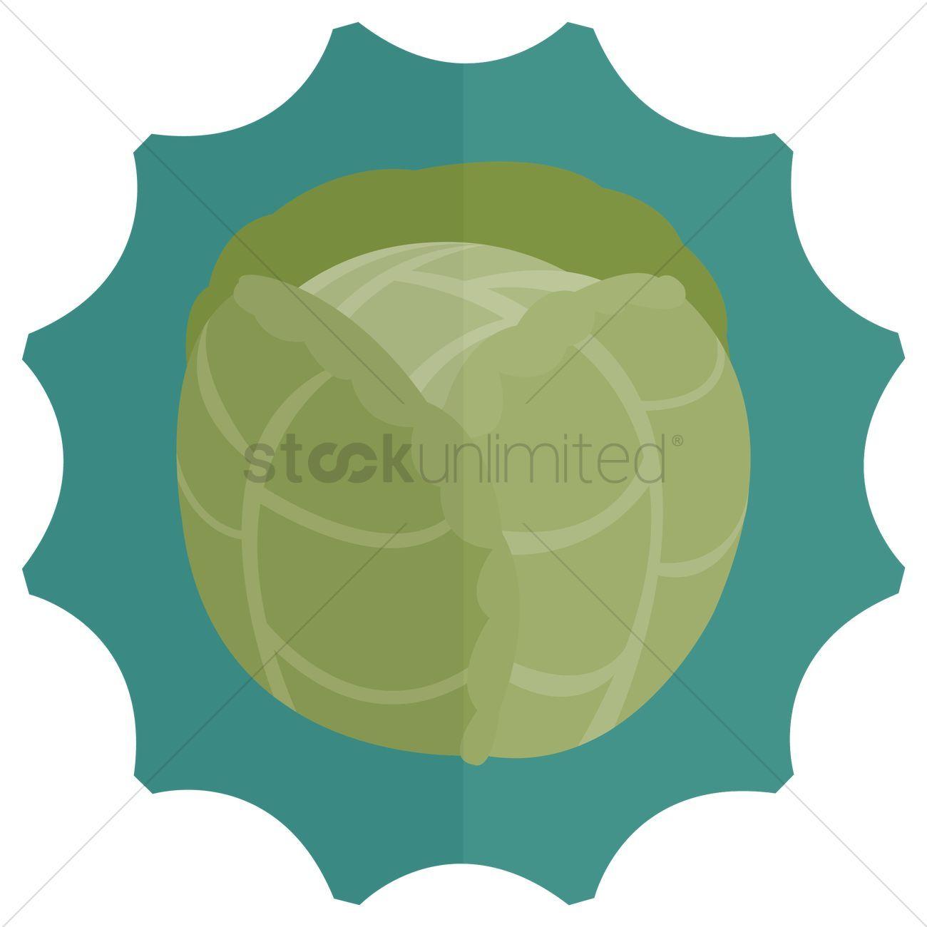 Cabbage vectors stock clipart