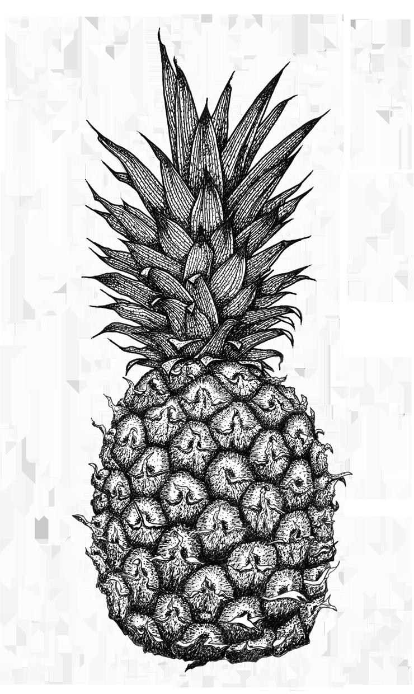 ананас черно белый картинки эфире
