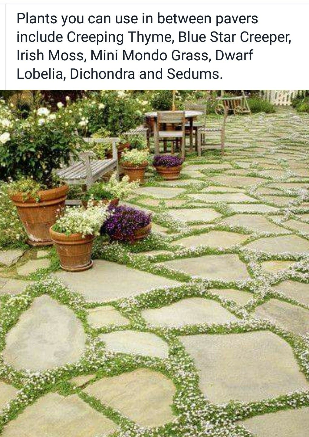 Pin By Pippa Riddle On Outdoors Front Yard Landscaping Yard Landscaping Pathway Landscaping Backyard landscaping ideas with pavers