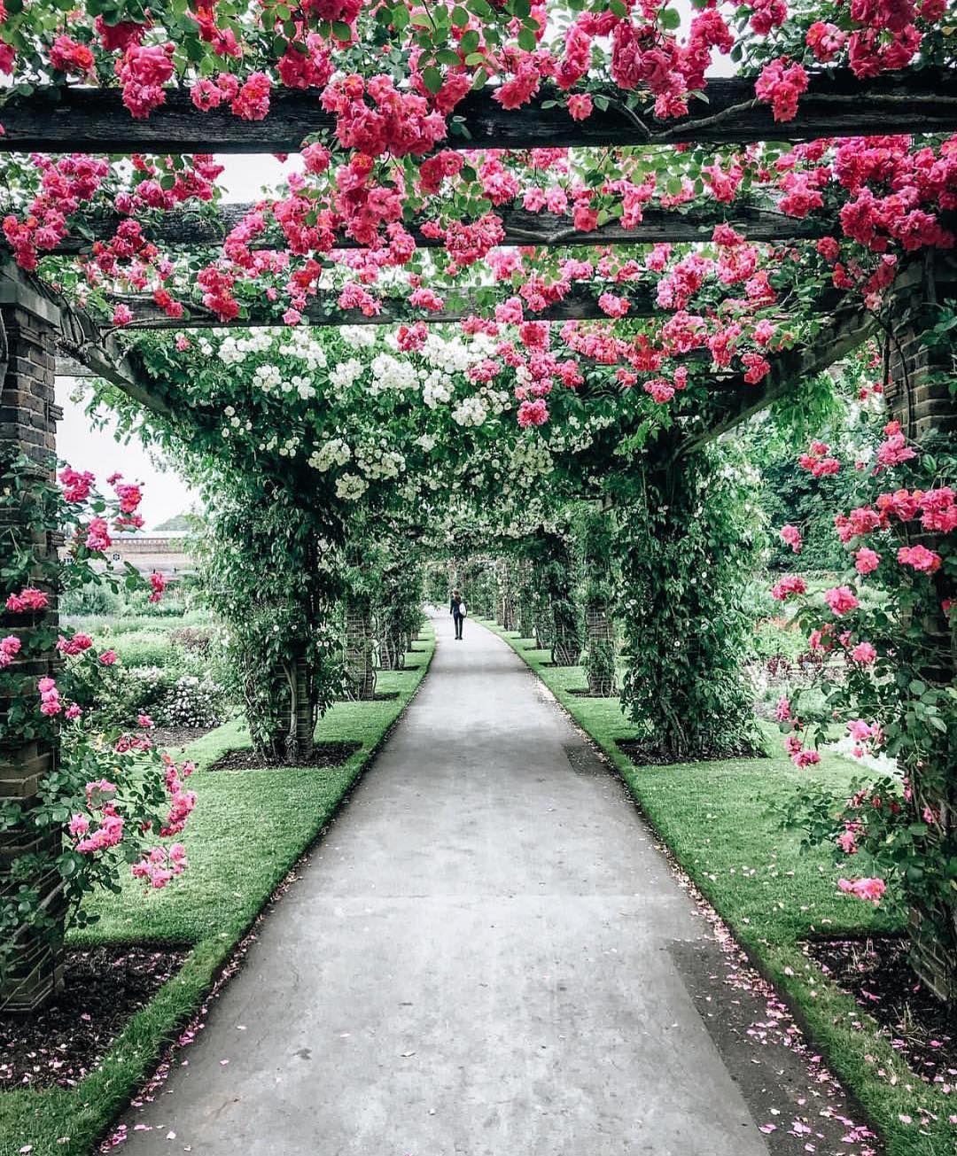 розовый сад фотографии они уютно