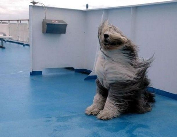 Hair flowing in the wind.