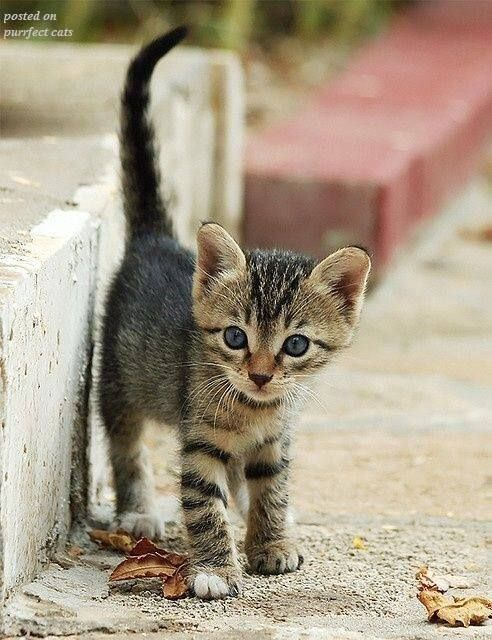 Precious Little Baby Kitty I Hope This Baby Has A Forever Home With Loving People Or A Loving Person To Care For It Pretty Cats Tabby Cat Cats