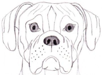 How to Draw a Dog Boxer  Arts and Crafts  Pinterest  Face
