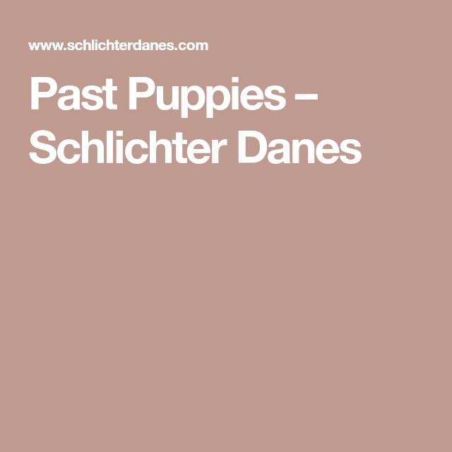Past Puppies – Schlichter Danes | Great Dane luv