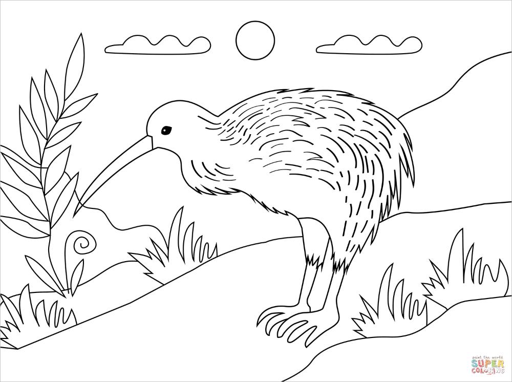 Kiwi Bird Coloring Page Free Printable Coloring Pages Bird Coloring Pages Free Printable Coloring Pages Coloring Pages