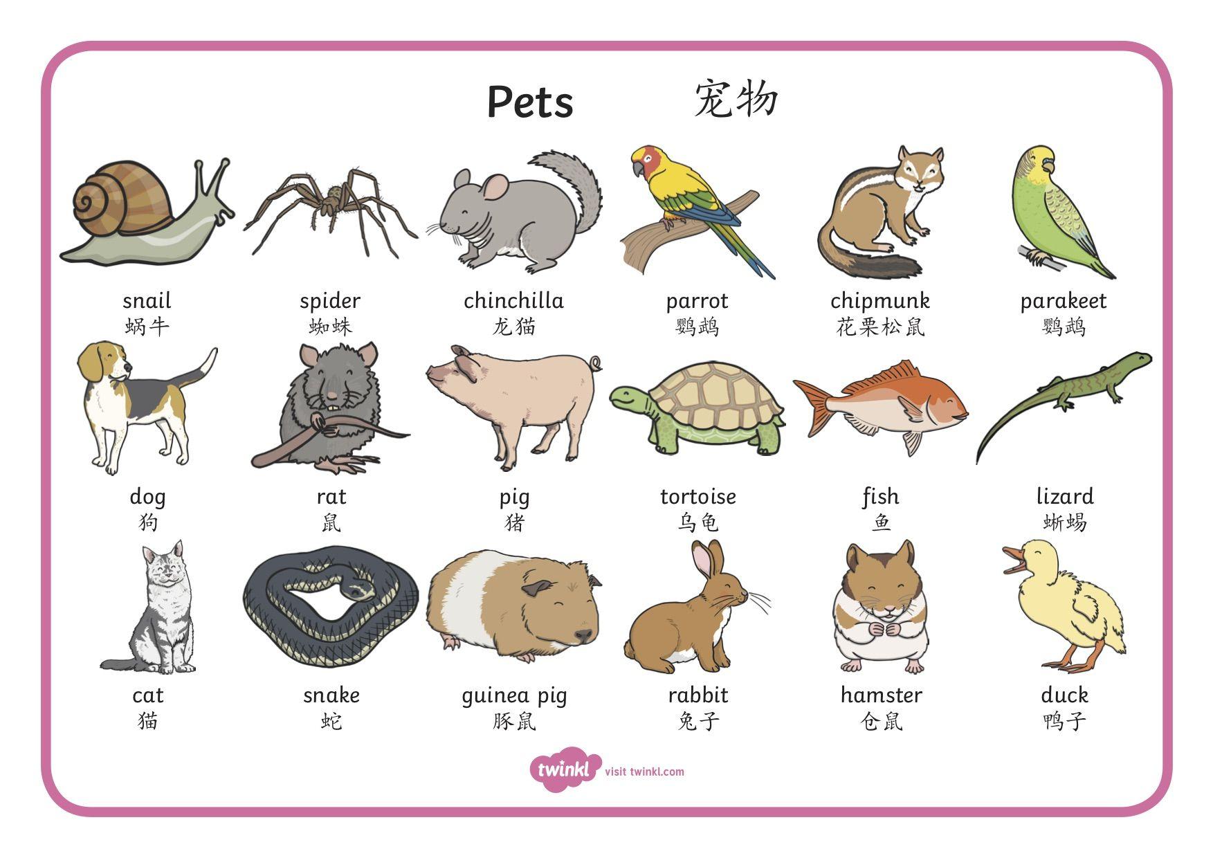 Pet words mat