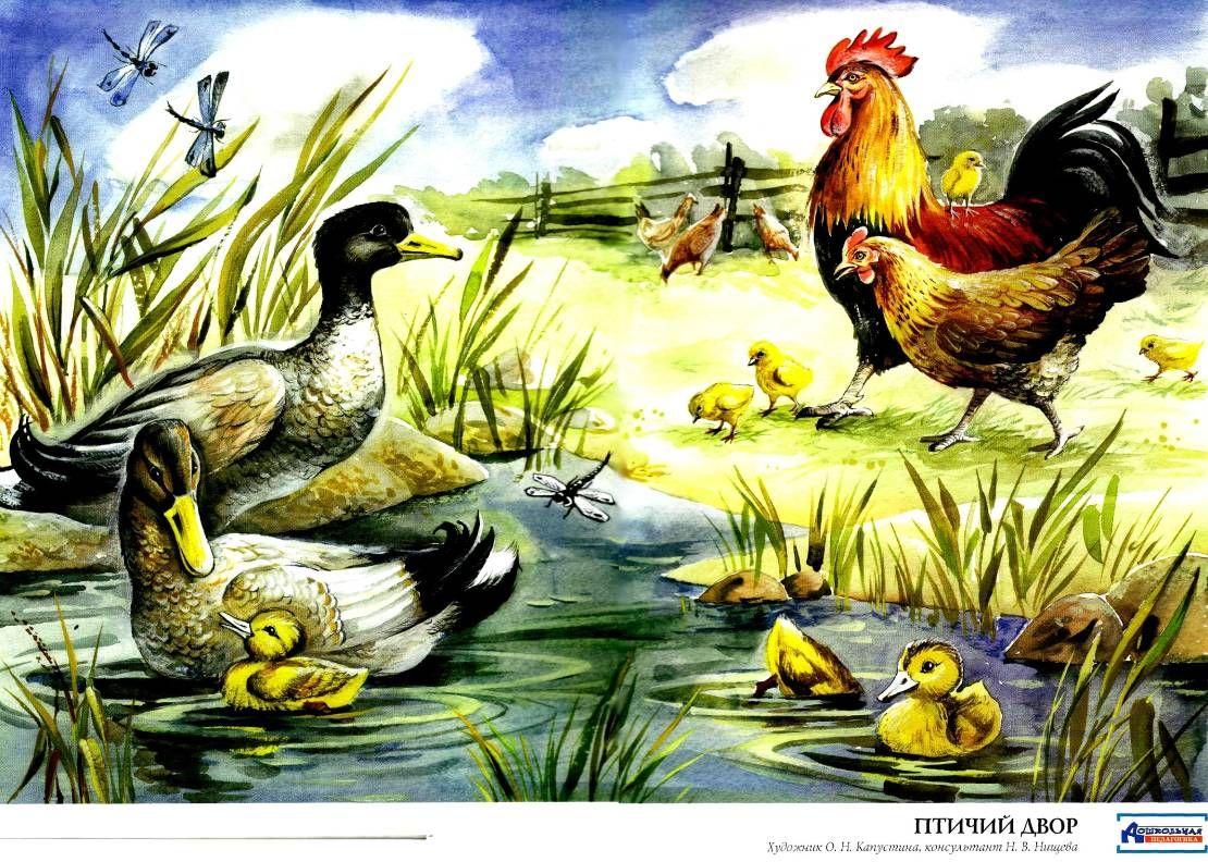 картинки домашних животных и птиц только узнал