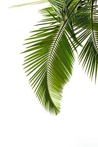 Leaves Of Palm On White Background Wall Decal 30 Inches H X 20 Inches W Peel And Stick Removable Graphic Wallmonkeys Palm Leaves Print Palm Leaves Tropical How to credit on printed materials? pinterest