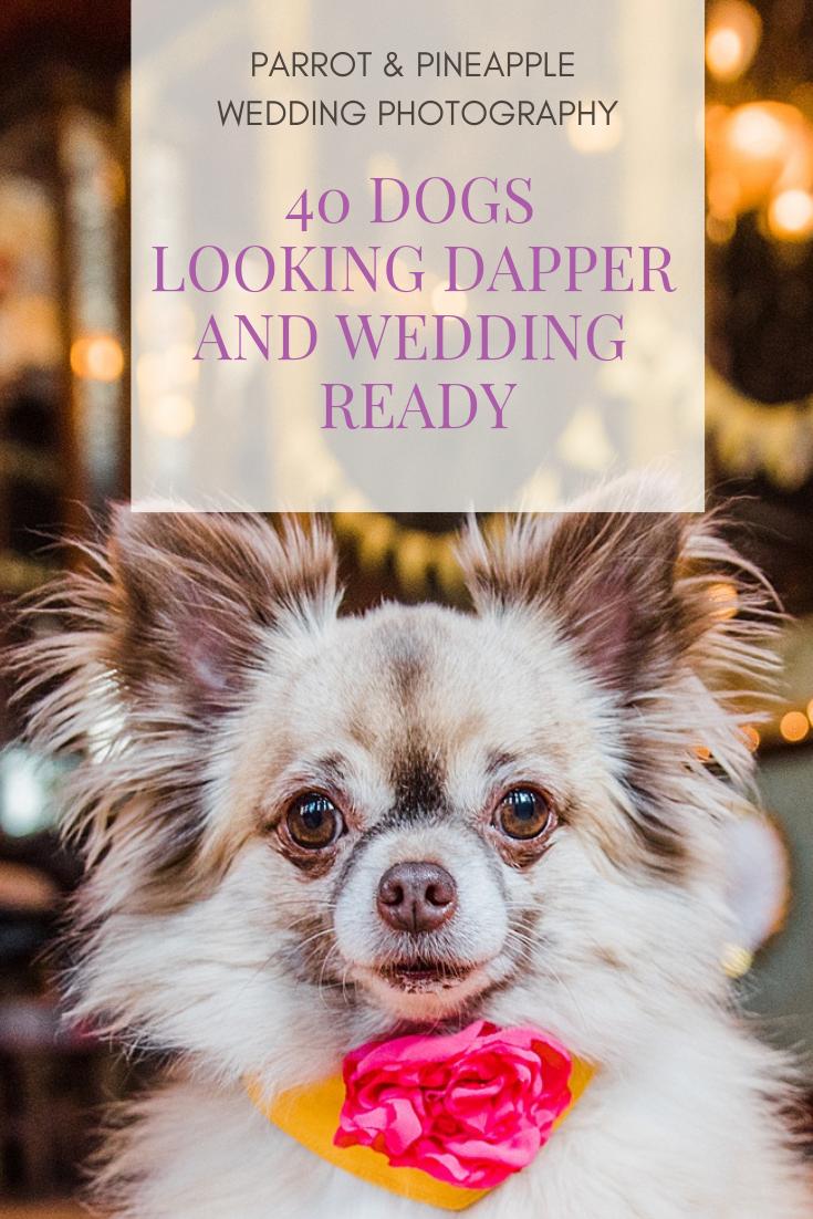 Wedding decorations reception october 2018 Dog Wedding Style  October Weddings   Pinterest  Dog wedding