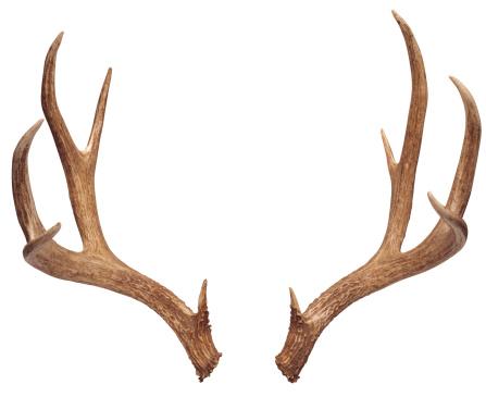 Antler Options | Student Prince | Pinterest | Horns, Deer and Deer ...