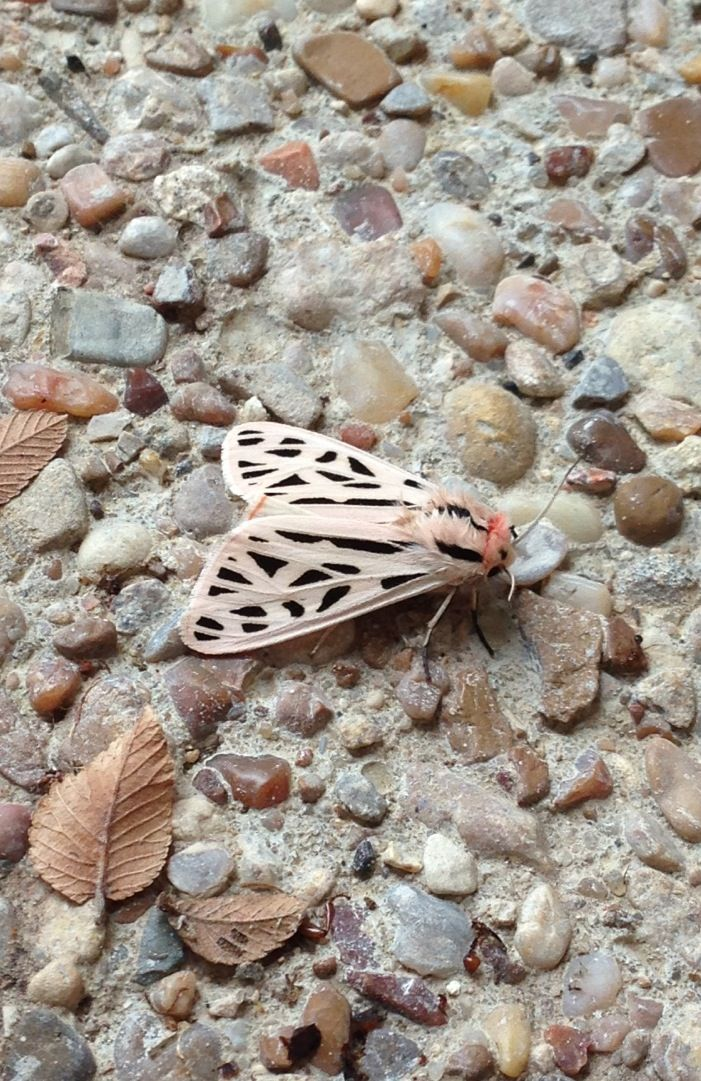 Mosaic moth camouflage.