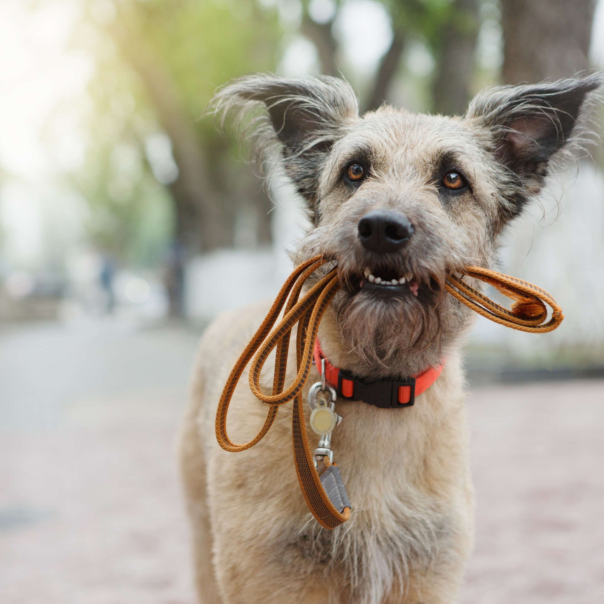 These Are the Most (and Least) PetFriendly Cities in the