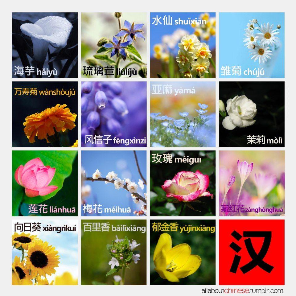 Flowers Arum, Sunflower, Lotus, Fig Marigold, Borage