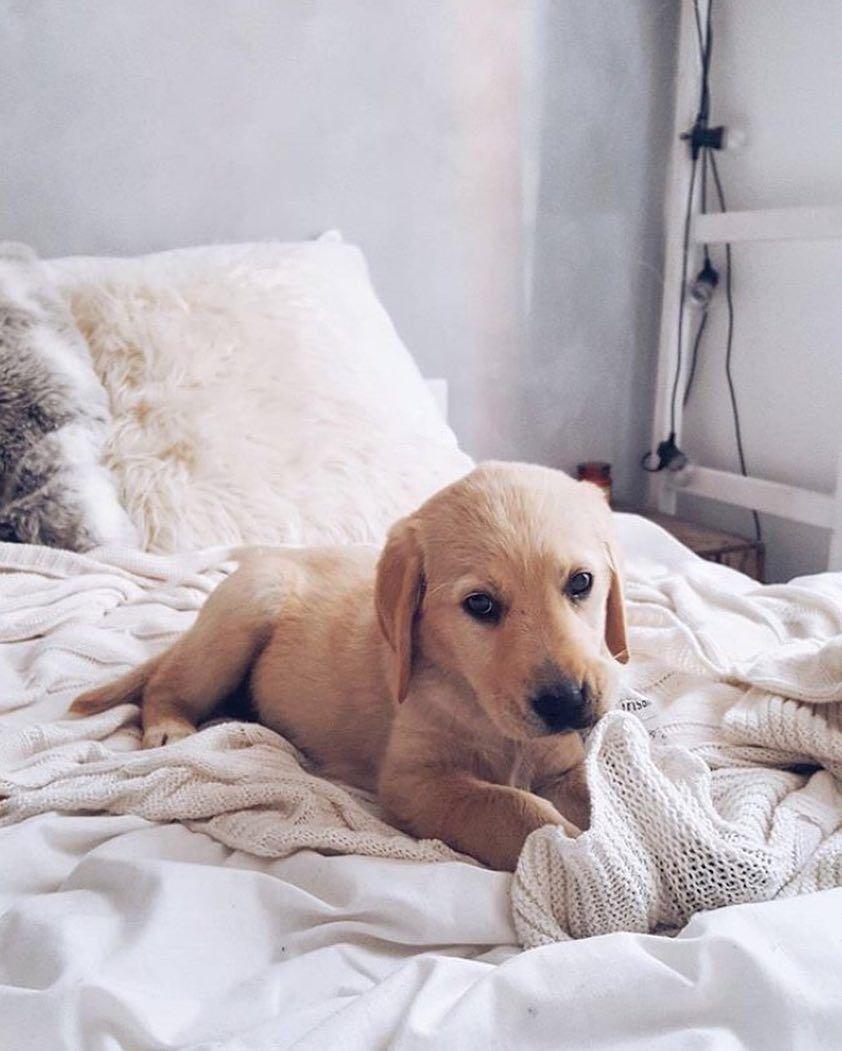 Offtheclosetlooks Ambassador Search 2019 Cute Baby Animals