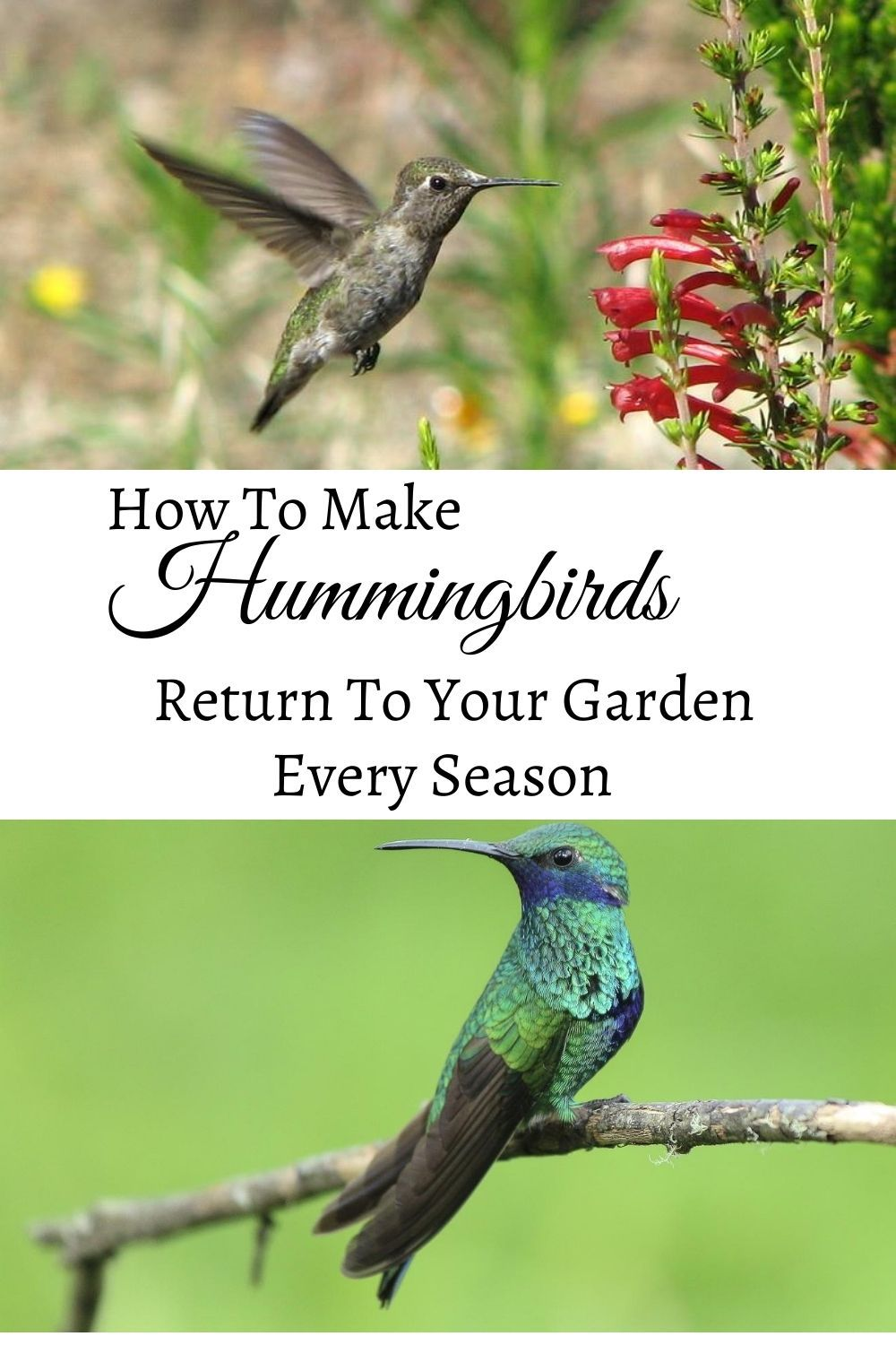 Keep Hummingbirds Coming Back Garden Down South in 2020
