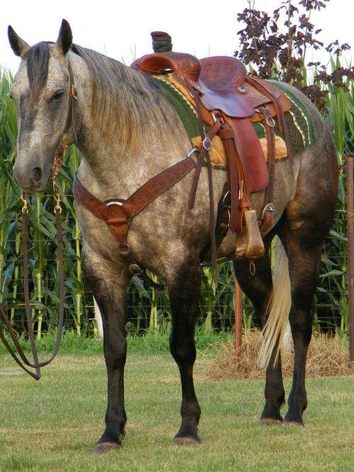 007 Grey Quarter Horse! STUNNING! … Horses Horse…