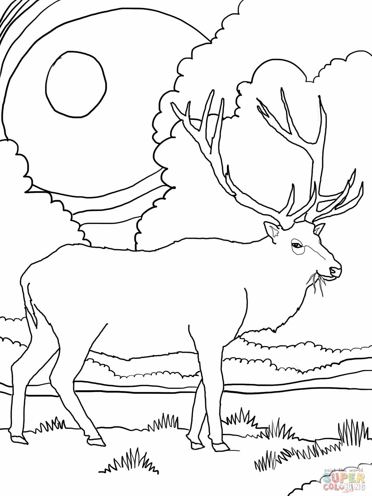 Rocky Mountain Elk Online Coloring Pages Free Online Coloring Deer Coloring Pages
