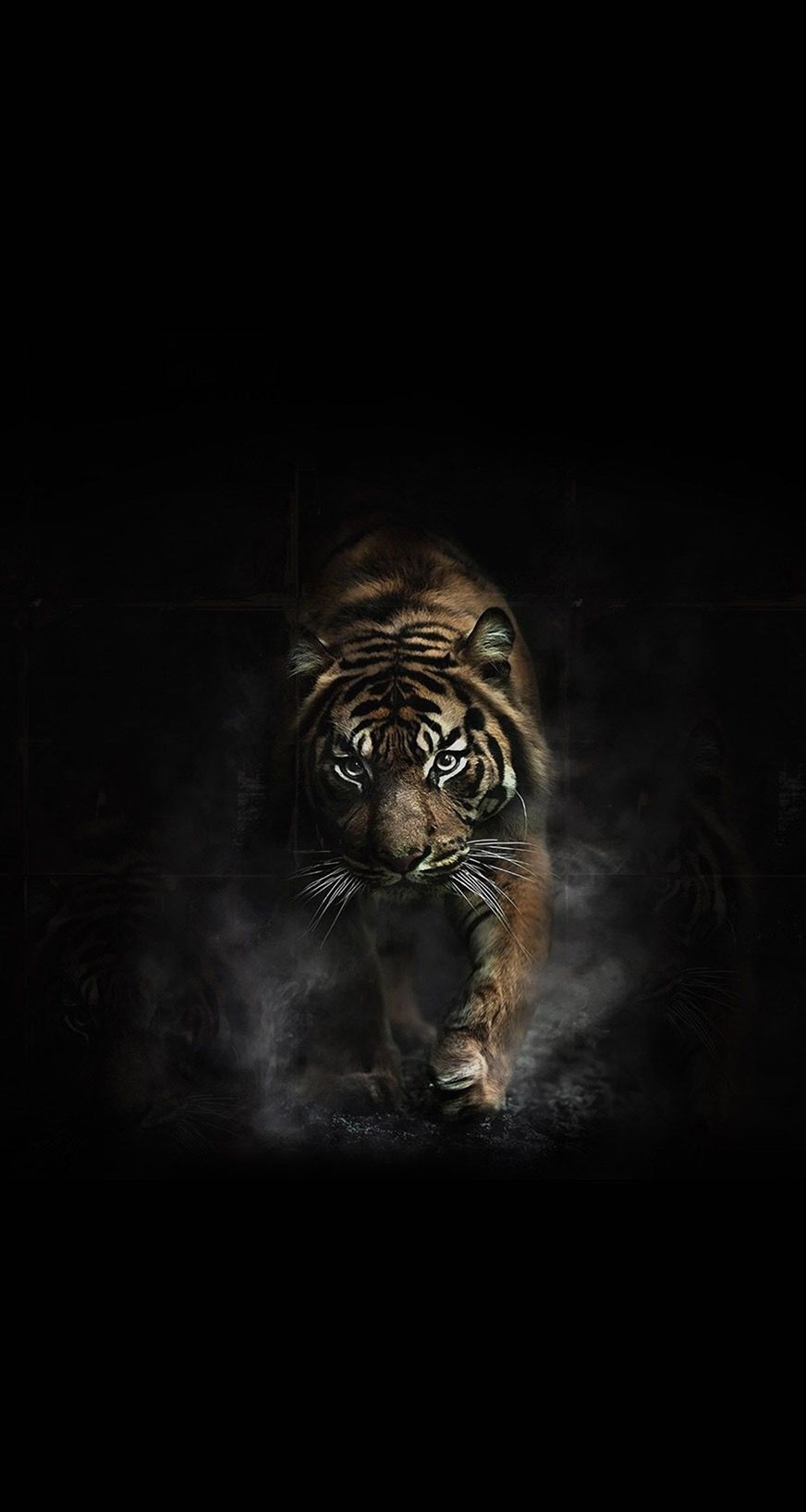 Shere Khan Tiger Images Tiger Wallpaper