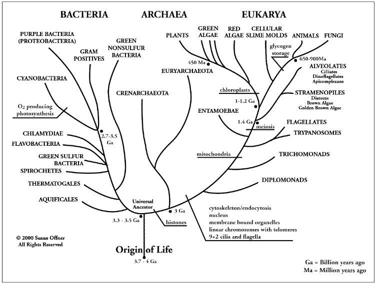 A Universal Phylogenetic Tree - bioinfor_cnu - bioinfor ...