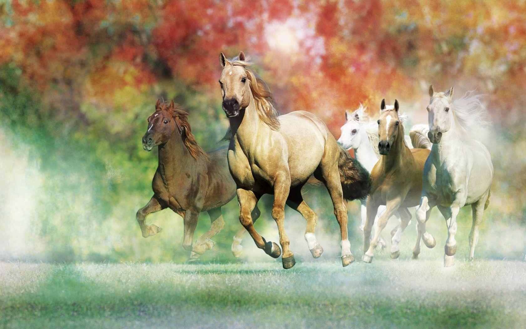 white horse wallpapers wallpaper 1680×1050 horse wallpaper hd (48