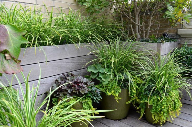 Große Pflanzkübel bepflanzen-Ziergras-Carex-Ice-Dance-Heuchera-Plum ...