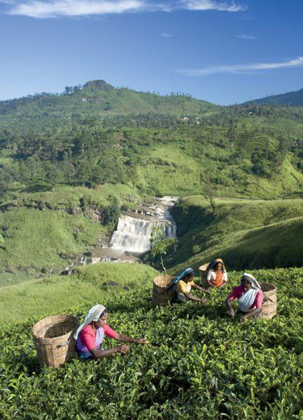 Sri Lanka The Place Where I First Caught Carmen Sandiego Nuwara Eliya Places To See Landscape Scenery