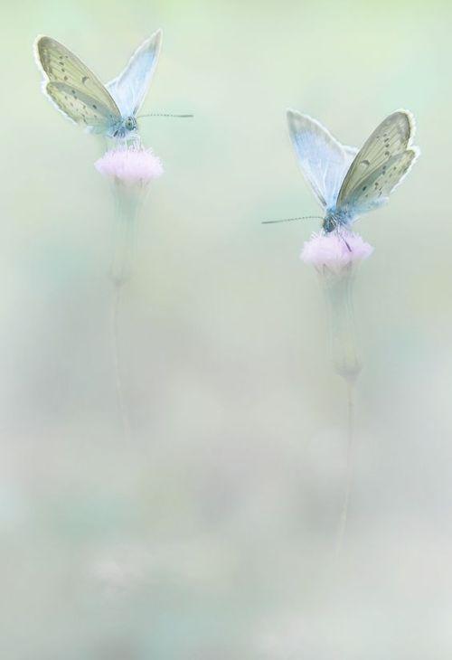Oursecretcollectorkid Soft Blue And Sage Green La Vie En Couleur Photographie Effet Papillon