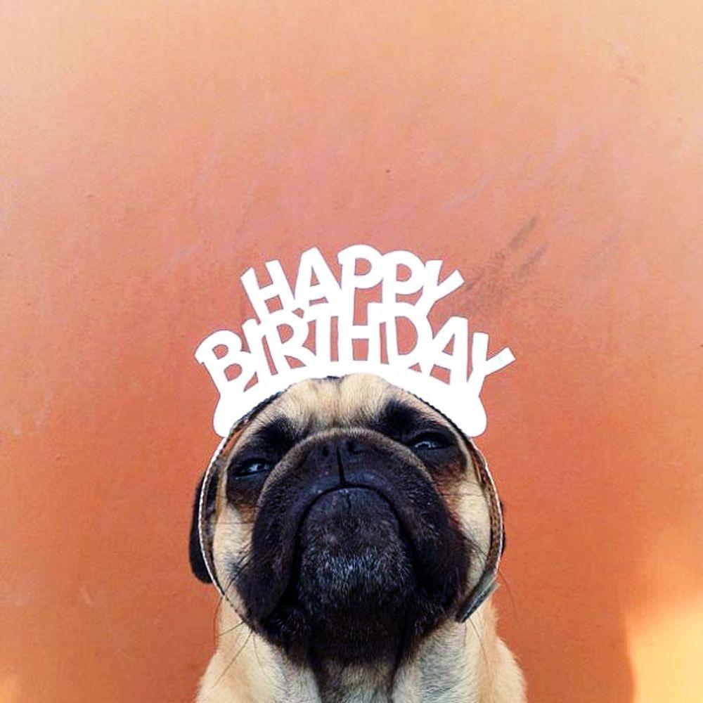 Happy Birthday Happy Birthday Pug Birthday Pug Funny Happy Birthday Images