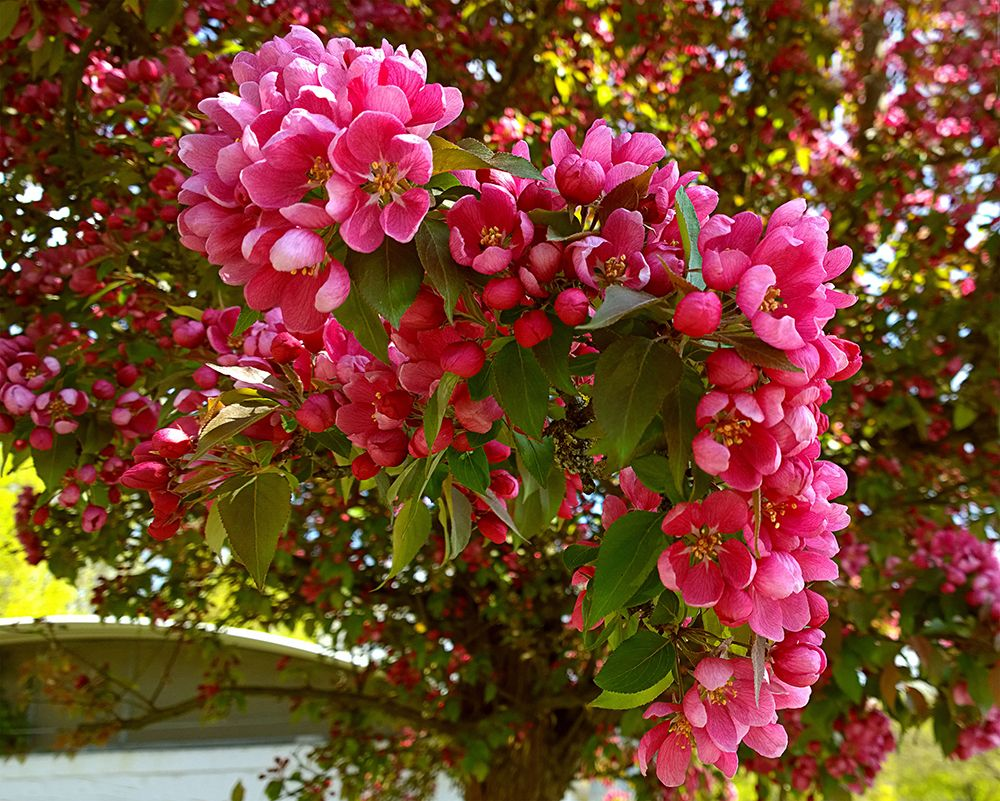 The Best Small Trees For Every Type Of Small Yard And Garden Sunset Small Ornamental Trees Small Trees Ornamental Trees Landscaping