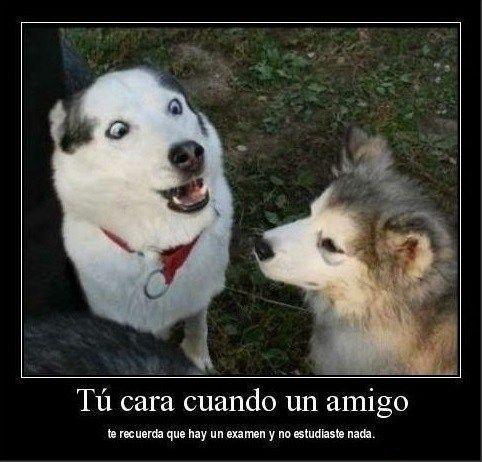 Imagenes De Asombro Cuando Nos Enteramos De Algo Las Mejores Imagenes Online Memes Animales Memes Perros Memes De Animales