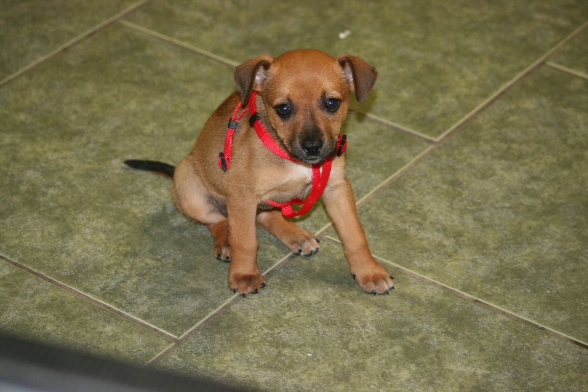 Puppy paws rescue reviews