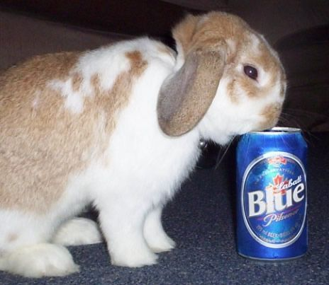 Rabbit Drinking Beer Alcoholic Wanna Be Animals Beer Humor