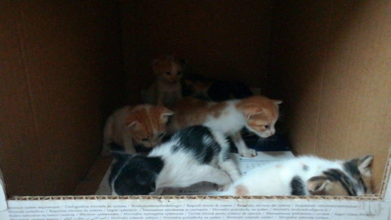 New 6 Born Kitties Cat Work Kitty Mother Cat