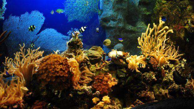 Fish Tank Background Printable 50 Best Aquarium Backgrounds In 2020 Aquarium Live Wallpaper Aquarium Backgrounds Live Wallpapers