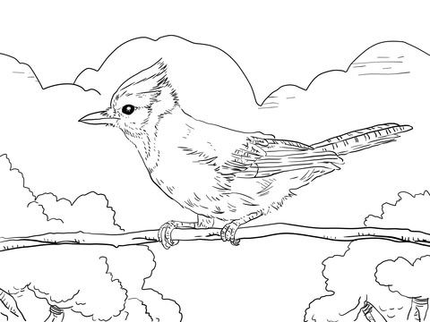 Perched Blue Jay Coloring Page From Jay Category Select From 29188 Printable Crafts Of Cartoons Nature Anim Bird Coloring Pages Coloring Pages Blue Jay Bird