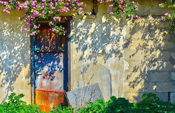 Flower, Flora, Garden, Nature, Tree