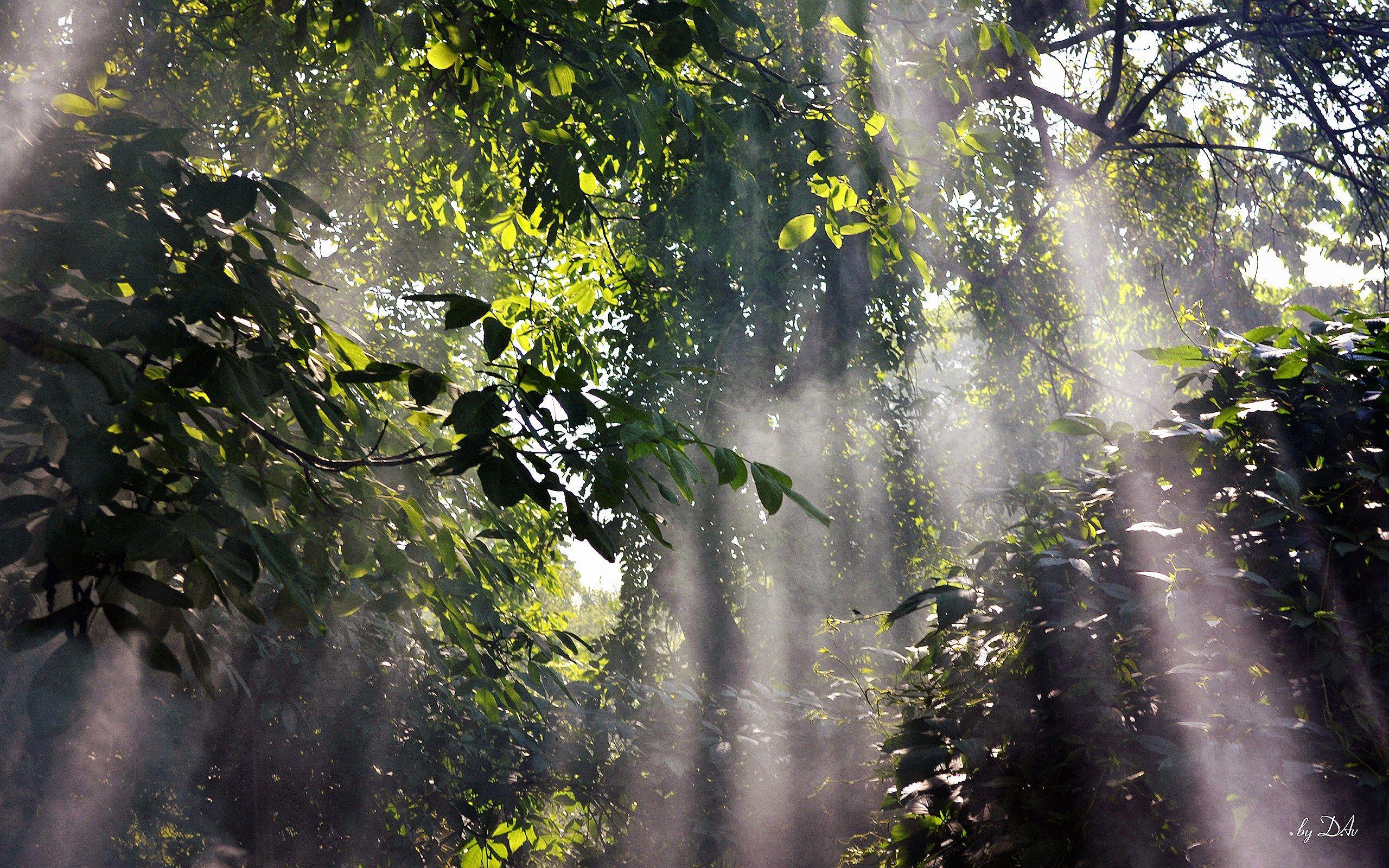 rainforest Foggy Rainforest Wallpapers Pictures Photos