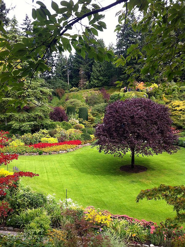 Fall-blooming flowers for long-lasting colour in the garden
