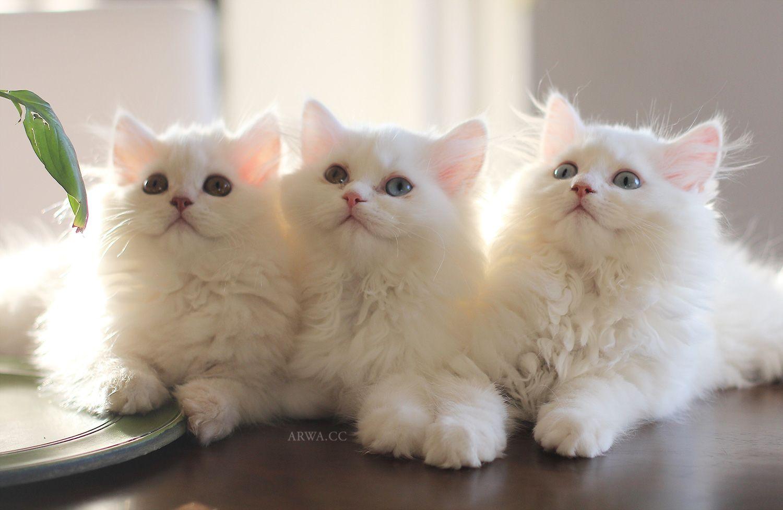 كيف أعتني بنظافة وصحة قطتي مدونة أروى About Me Blog Cats Blog