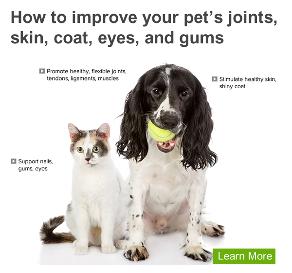 See how your pet can benefit from Liquid BioCell™ Pet. | Pets, Pet health,  Urinary health