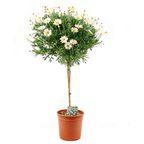 Rosliny Na Balkon Balkon I Taras W Sklepach Leroy Merlin In 2020 Plants Herbs
