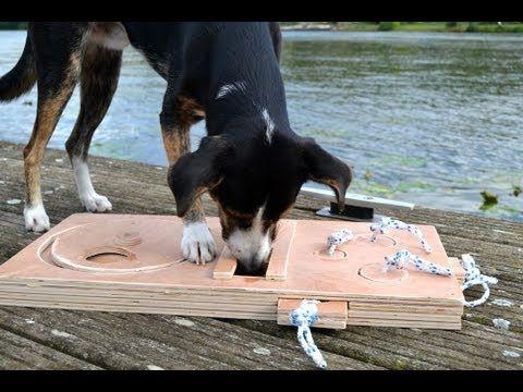 Hundespiel Aus Holz Bauen Youtube Hund Dog Toys Dogs Und Toys