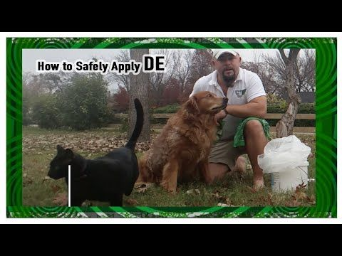 How to SAFELY apply Diatomaceous Earth to your Pets
