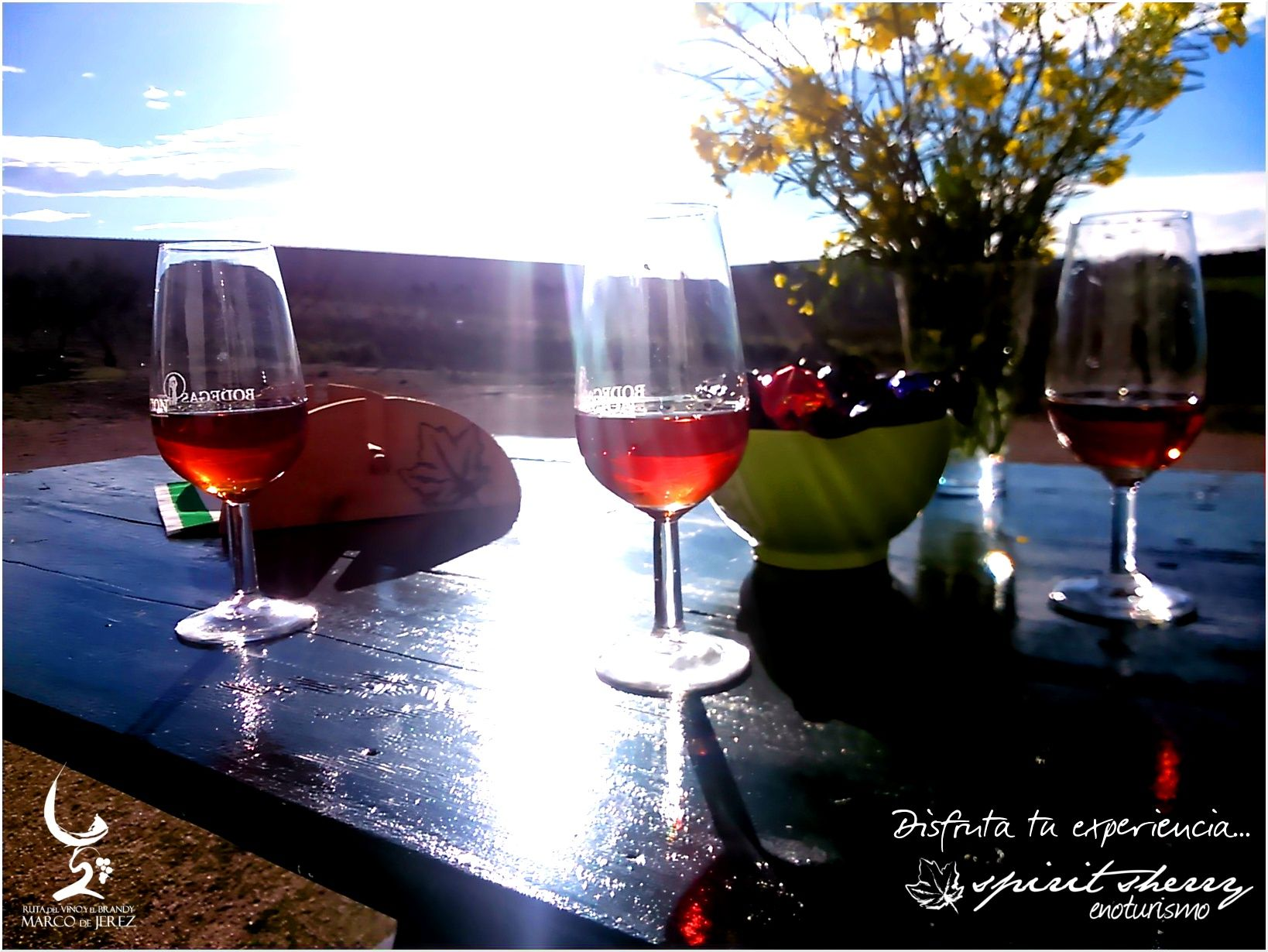 Enjoy the experience... Vineyard+ Sherry-Wine+ Sun = Spirit Sherry, wine tour... Jerez de la Frontera, Cádiz, Andalucía, Spain