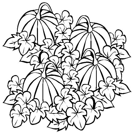 Pumpkins cornstalks and apples coloring pages ~ Pumpkin patch | digital stamps and other printables ...
