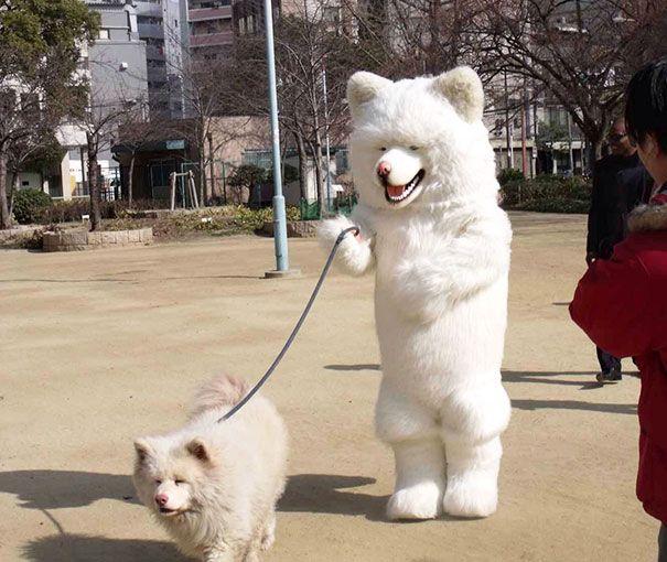 Like Owner Like Pet 79 Pics Dog Walking Dog Suit Cute Animals