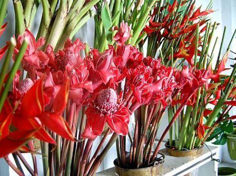 Alagoas E Destaque Na Producao De Flores Tropicais Flores