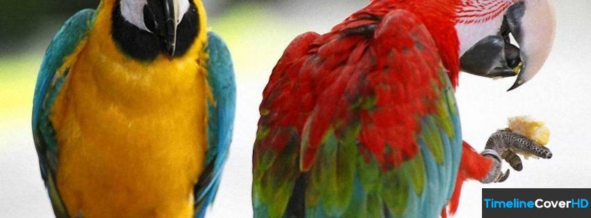 Funny Parrot Facebook Timeline Cover Facebook Covers - Timeline Cover HD