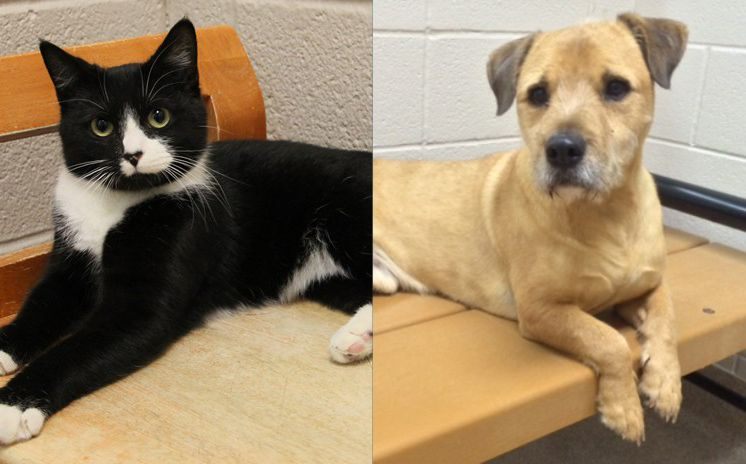 Pets of the Week Meet Teddy & Victoria Animal advocacy